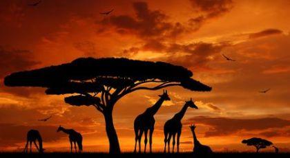 afrique15