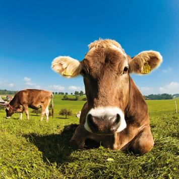 UE / États-Unis : les Vingt-huit vont importer plus de viande bovine américaine
