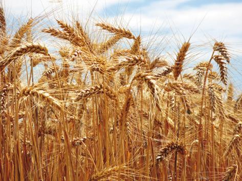 Agroalimentaire : le commerce extérieur de l'Union européenne résiste à la Covid-19