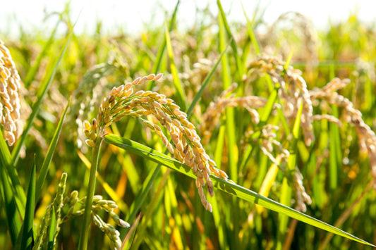 Agriculture : 16 pays dénoncent les normes européennes à l'OMC